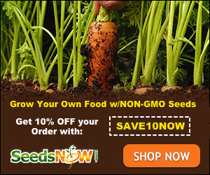 Shop here for the best of organic seeds!