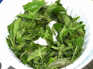 stevia-extract-4-1024x766