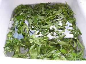 stevia-extract-5-1024x766