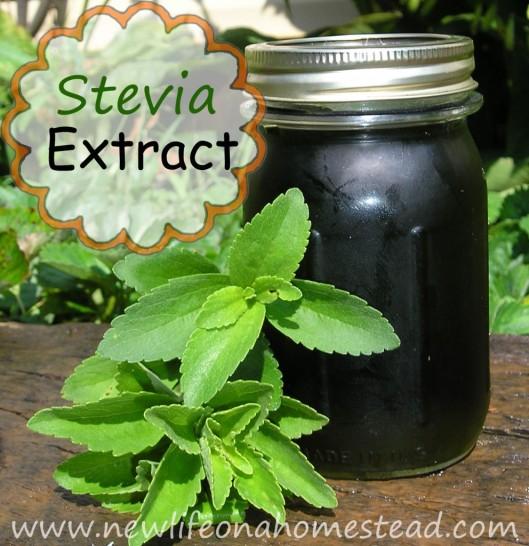 stevia-extract-992x1024