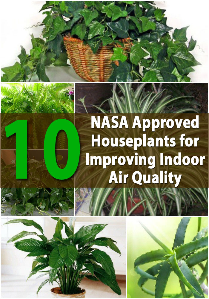 Go Natural Indoor Plants That Clean Your Air The